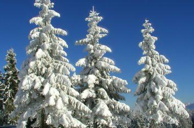 Рождественская история  «СКАЗАНИЕ О ТРЕХ ДЕРЕВЬЯХ»   Олег ЗАМУРУЕВ