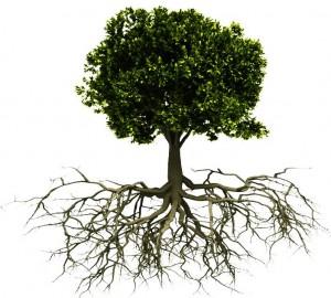 Дерево и его корни
